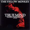 TRUE MIND ~TOUR '95-'96 FOR SEASON in motion