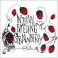 Internal Bleeding Strawberry [CCCD]<タワーレコード限定>