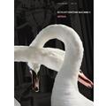 ボイコット・リズム・マシーン2 ~ヴァーサス~ [CD+DVD]