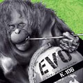 EVO~On The Verge Of A New Evolution