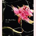 夢の花<通常盤>
