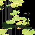 L.O.T.U.S./FOLKLORE/L.O.T.U.S.~池田聡、中西圭三、赤崎郁洋、New Folklore Group~ [HRAD-00014]