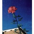 Polaris/月の恋人 [MTCA-5016]