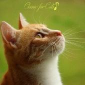 プラチナムベスト 猫ちゃんの好きなクラシック [UHQCD]