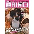 週刊朝日 2020年12月18日号<表紙・猫(撮影: 岩合光昭)>