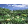 virtual trip 奄美 -黒潮の森-<低価格版>