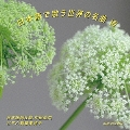 日本語で歌う世界の名曲 VIII<生産限定盤>