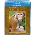 ディズニーネイチャー/サルの王国とその掟 [Blu-ray Disc+DVD]
