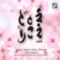 ええとこどり Vol.6 - 高昌帥: 桜花の光跡