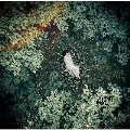 スターライトキセキ/Ark [CD+DVD]<初回限定盤B>