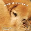 日本語で歌う世界の名曲 VII<生産限定盤>