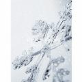 Winter Ballades [CD+DVD]<初回生産限定盤>
