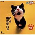 NHK 天才てれびくんワイド 天てれ猫だましぃ MTK The 5th