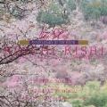 貴志康一:交響組曲「日本スケッチ」 生誕80周年記念コンサート ヴァイオリン協奏曲
