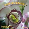日本語で歌う世界の名曲 V<生産限定盤>