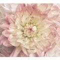 愛を両手に [CD+DVD]<初回限定盤>