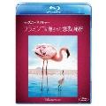 ディズニーネイチャー/フラミンゴに隠された地球の秘密 Blu-ray Disc