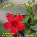 日本語で歌う世界の名曲 II<完全生産限定盤>