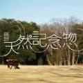 特別天然記念惣 (トクベツテンネンキネンソウ)