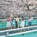 桜色ダイアリー<通常盤>