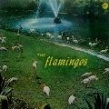 フラミンゴス<生産限定盤>
