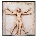 テーブル美術館 figma ウィトルウィウス的人体図