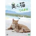 美ら猫 石垣島編