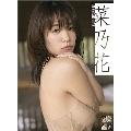 菜乃花 カレンダー 2019