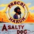 A Salty Dog
