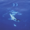 12DOLPHINS LEAVE THE PLANET/THE BEST OF DREAM DOLPHIN