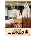 いやし猫 DVD 猫侍 三匹の玉之丞