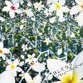 BLESS [CD+DVD]<初回生産限定盤>