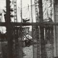 ケイオス・アンド・クリエイション・イン・ザ・バックヤード~裏庭の混沌と創造<完全生産限定盤>