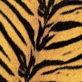 Tigermobile<完全生産限定盤>