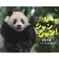 こっちむいてシャンシャン! カレンダー2019
