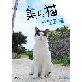 美ら猫 竹富島編