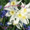 日本語で歌う世界の名曲 X<限定盤>