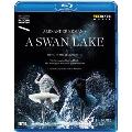 Mikael Karlsson: A Swan Lake
