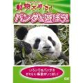 動物大好き!パンダと遊ぼう!