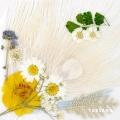 White Night: 3rd Album (WHITE VER)