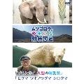 ムツゴロウのゆかいな動物図鑑 「ゾウとサイ 大型の哺乳類」/「ヒグマ ツキノワグマ シロクマ」