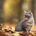 まるごと!秋 -Autumn-