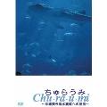 ちゅらうみ 沖縄美ら海水族館への招待[ASBY-3756][DVD]