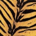 Tigermobile<初回生産限定盤>