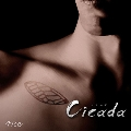 Cicada<通常盤>