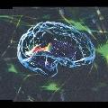 脳内モルヒネ