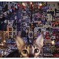 CATALOGUE 1987-2016 (B) [4SHM-CD+DVD]<初回限定盤> SHM-CD