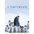 皇帝ペンギン ただいま