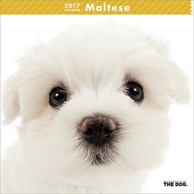 マルチーズ 2017 カレンダー [CL1125]