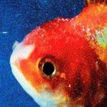 Big Fish Theory CD